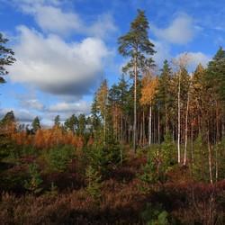 kleurrijken  bossen
