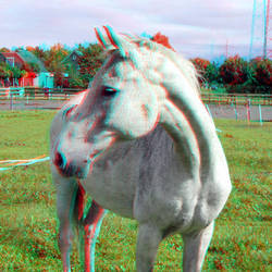 Paard in OSS 3D