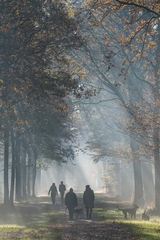 mistige wandeling - Wandeling Breda Liesbos 20 nov 2019