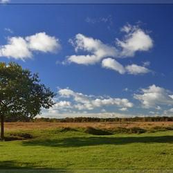Windows Vista op de Delleboerster Heide