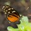 Vlinder - Vlinderkas Hortus Botanicus Amsterdam