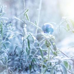 Frozen Bubble.