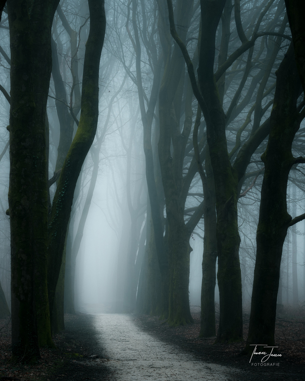 Path to the light -