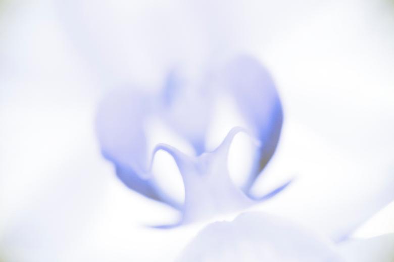 Orgidee - Net een nieuwe macro-lens, altijd leuk voor bloemen toch?