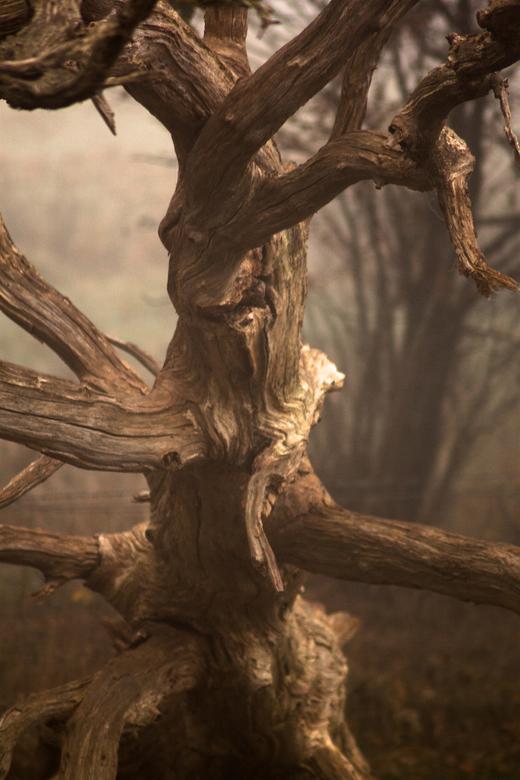 fairy tree -