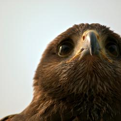 roofvogel photokina 2010