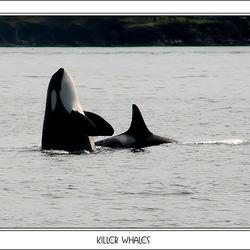 Killer whales2