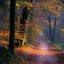 Bos met zon en mist
