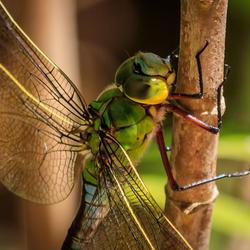 Wat een schoonheid is dit beestje.....