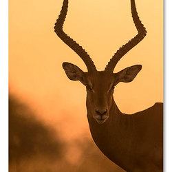 Sunset Impala