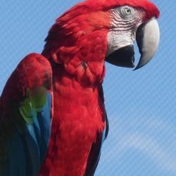 Pretty Parrot