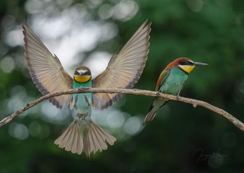 Ready for landing. - Weekje in Hongarije verbracht.<br /> <br /> O.a. deze prachtige vogels mogen vastleggen. Eentje zat op de uitkijk en de andere