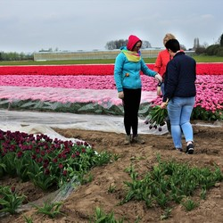 bosje tulpen voor oma