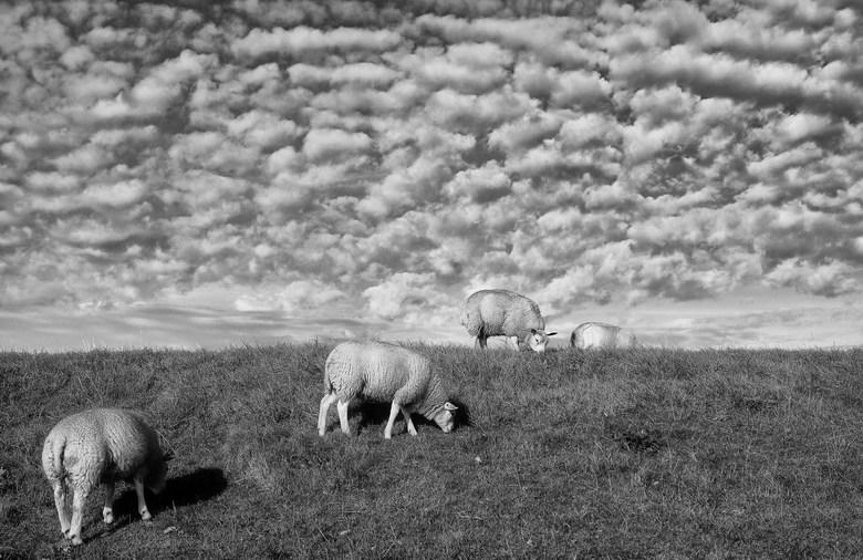 Schaapjeswolken -