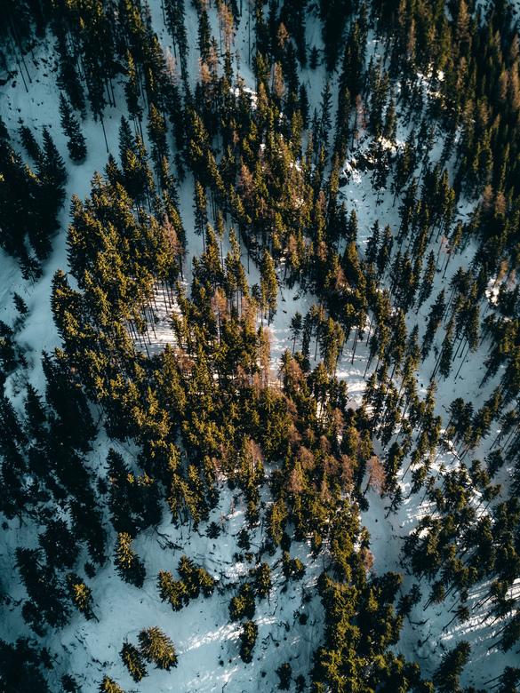 Oostenrijkse bossen, Ischgl