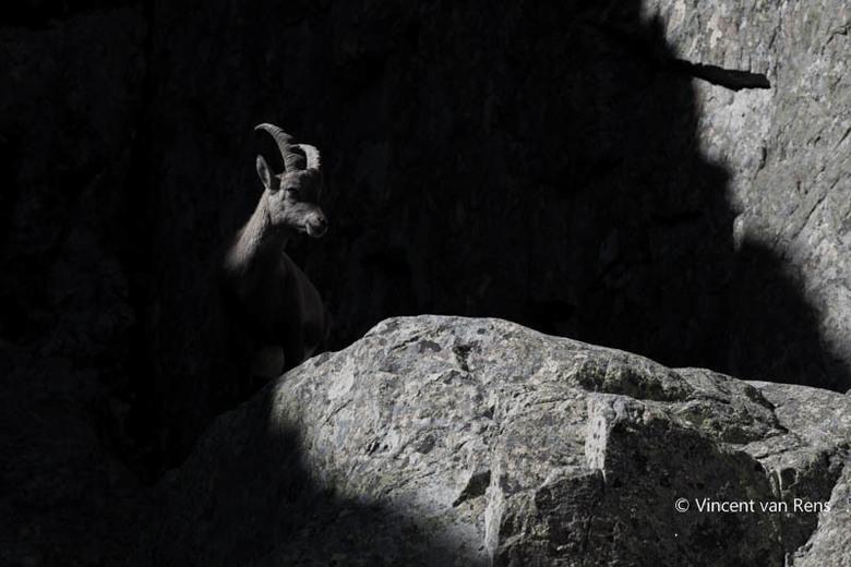 Steenbok speelt met licht