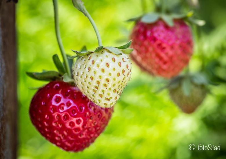 aardbeien -