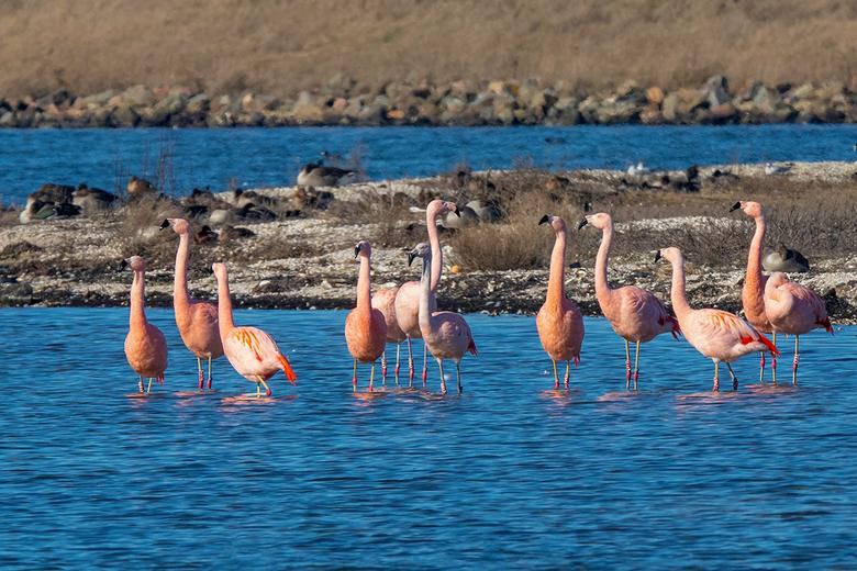 Flamingo's 2019 - Deze flamingo's waren lekker aan het genieten van de Hollandse zonnetje, van de vorige week (9)