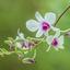 7538 orchidee