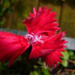 Red flower birdlike