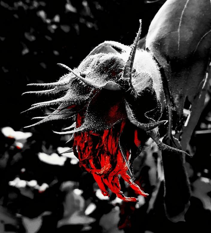 Bloed Bloem -