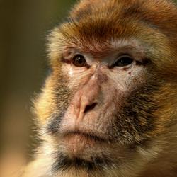Wat zou zo'n aap nou denken....