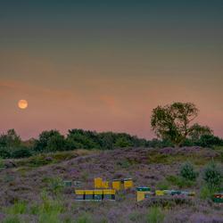 De maan komt op over het Herikhuizerveld