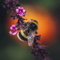 Bee the Light