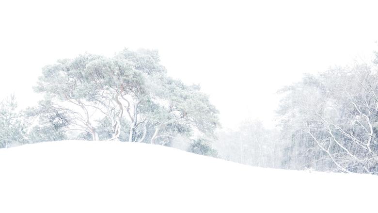 Sneeuwstorm - Deze foto is gemaakt op NP De Maasduinen-Berger Heide in Limburg.<br /> Het was de eerste sneeuw van de maand december 2017