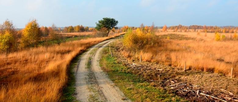Bargerveen 1 - Het mooie Bargerveen is een deel van mijn werkgebied. De herfst laat zien hoe sfeervol dit ruige gebied kan zijn.