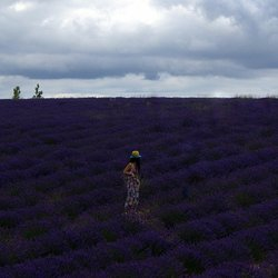Girls in a Lavenderfield.
