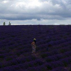 Girls in a Lavenderfield.