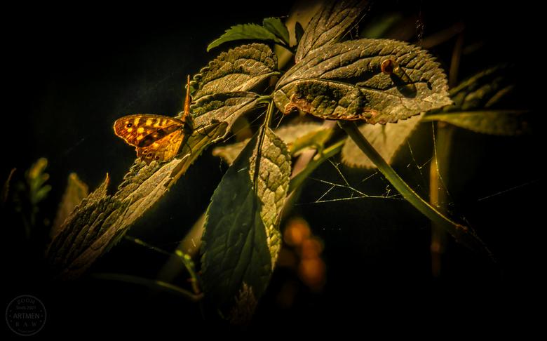 Catch the sunlight - Puur natuur. Met de 150-500 mm lens geschoten, foto wel moeten croppen. Maar heerlijk om het zonlicht zo zacht te vangen.