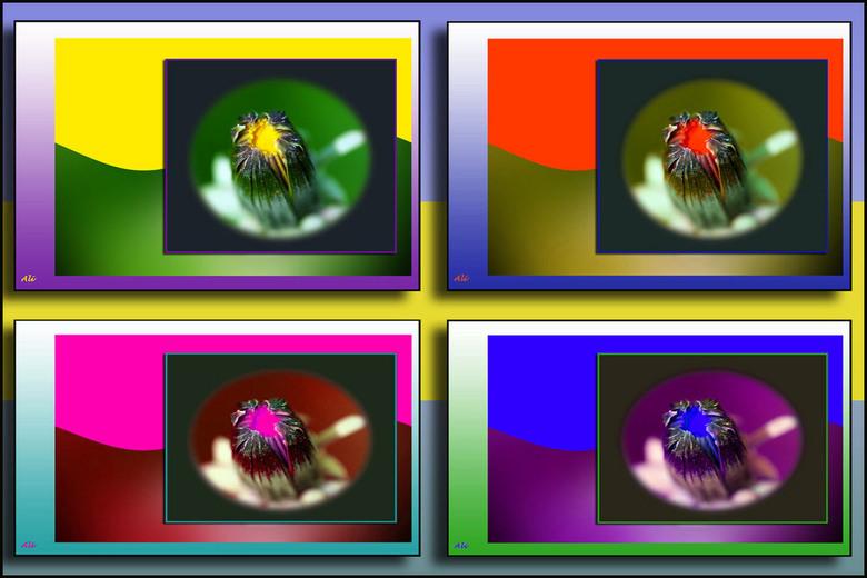 Keus in kleur....... - 4x dezelfde bloemknop, vervat in verschillende kleuren kaders, om jullie te laten zien hoe een foto verandert als je andere kle