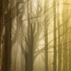 Mystic Trees II