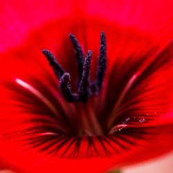 macro rood