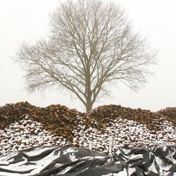 Sneeuw en Suikerbieten