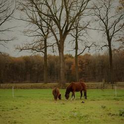 Herfst in t land