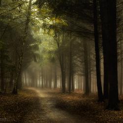 Forest Light.