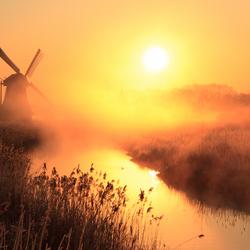 Gouden molen