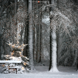 A Cold Christmas Seat
