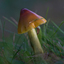 De ochtend paddenstoel