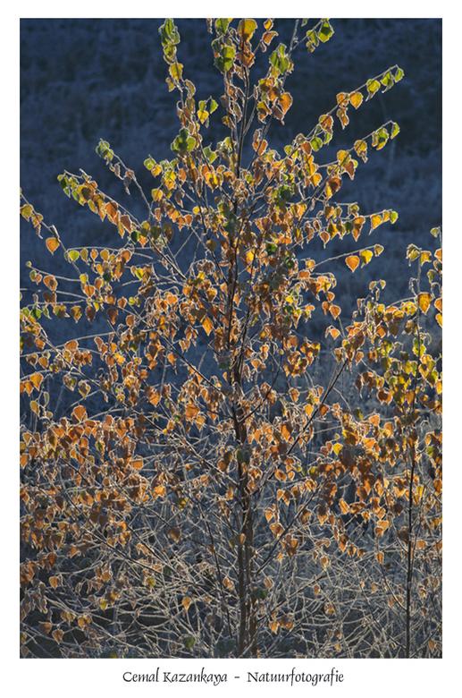Herfst en Koud - Herfst en Koud..
