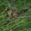 eekhoorn bij daimond lake Oregon
