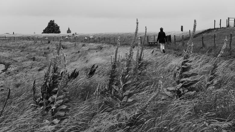 Waarde - Wandelaar - Wandelaar aan de dijk van Waarde (Zeeland, Holland) op een winderige dag.