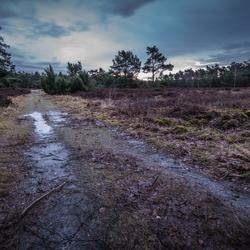 Natte Heide