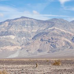 Lonely coyote in Death Valley Fotowedstrijd Wildlife