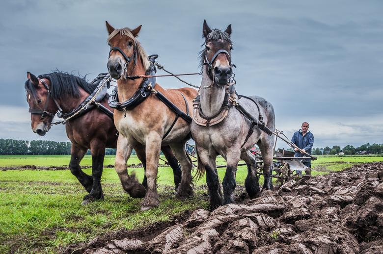 Werk paarden