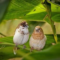 Twee schattige vogeltjes