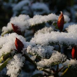 Lente en Winter